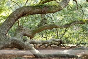 Angel Oak 10 wm