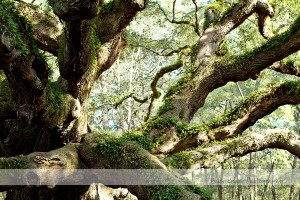 Angel Oak 11 wm