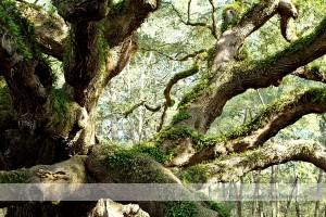 Angel Oak 11 wm