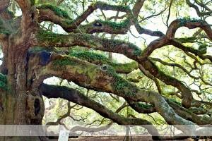 Angel Oak 15 wm