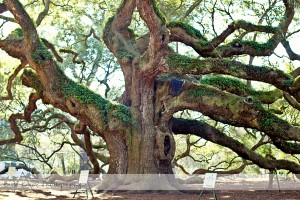 Angel Oak 16 wm
