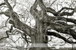 Angel Oak 19 wm