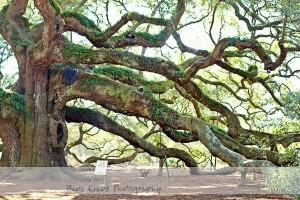 Angel Oak 2 wm