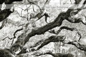Angel Oak 20 wm