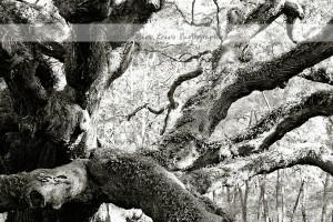 Angel Oak 21 wm