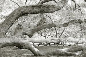 Angel Oak 22 wm
