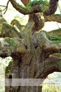 Angel Oak 4 wm