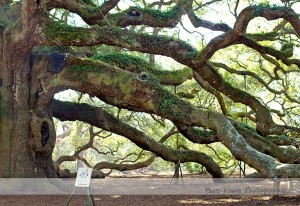 Angel Oak 5 wm