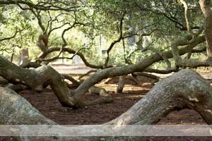 Angel Oak 7 wm
