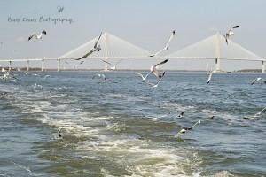 Fort Sumter 20 wm