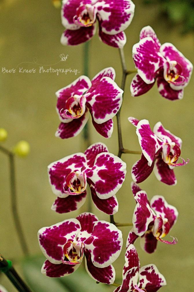 violet orchids wm