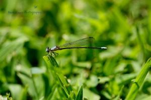 Dragonfly 1 wm