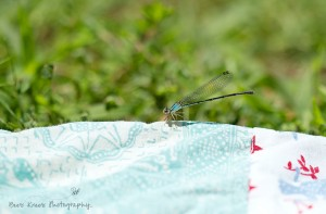 Dragonfly 2 wm