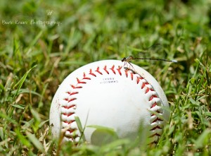 Dragonfly on baseball wm