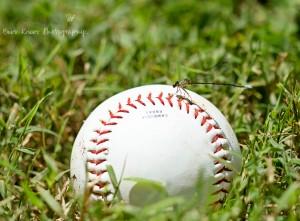 Dragonfly on baseball wm
