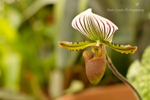 Orchid wm