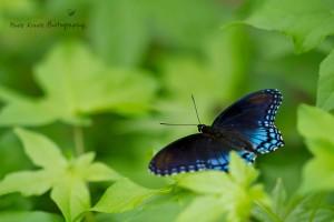Butterfly 2 wm
