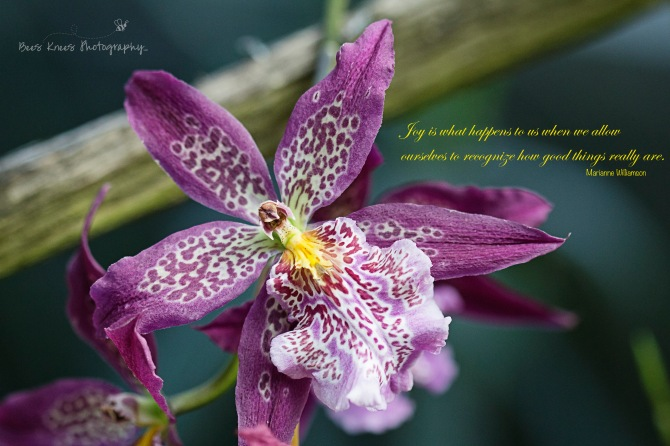 Gratitude Joy Quote wm