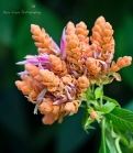 Nature's Bouquet wm